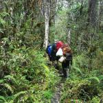 Carstensz djungel